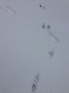 Mine and CJ's snow tracks