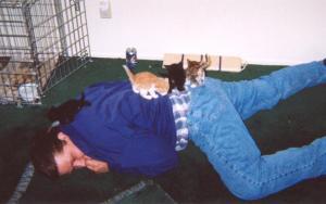 All four kittens climbing on Chris
