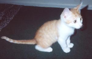 Lazarus the Kitten