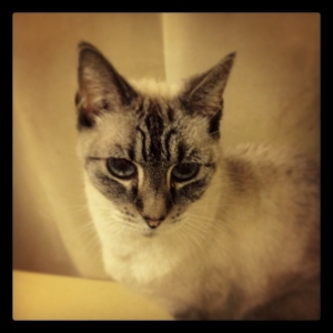Penelope 2015